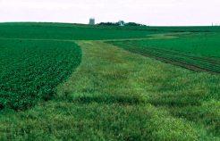 grassWaterway
